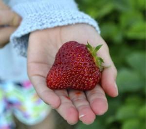 strawberry-jackpot-loris-getting-to-yum-story