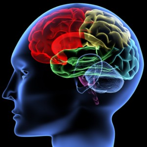 human_brain_memory-300x299