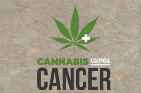 3 Ways Cannabis Affects Cancer Cells